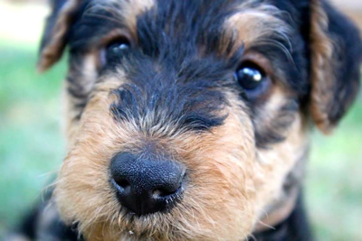 community-education-dog-1