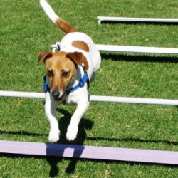 15-Week-Flexi-Pass-mornington-peninsula-paw-behaviour