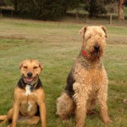 Personal-Training--mornington-peninsula-paw-behaviour