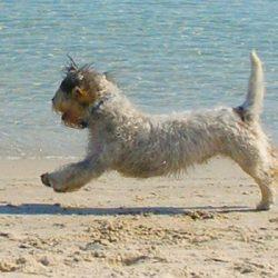 Positive-Reinforcement-Dog-Training-Intro-&-Demo-mornington-peninsula-paw-behaviour