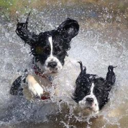 Super-Puppies---Frankston-mornington-peninsula-paw-behaviour