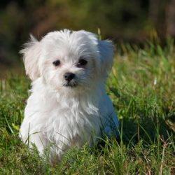 Super-Puppy---Saturday-mornington-peninsula-paw-behaviour